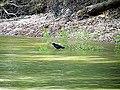 Parkers Creek Jordan Lake NC SP 3751 (36009079281).jpg