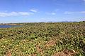 Parque Nacional da Restinga de Jurubatiba 35.jpg