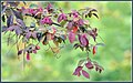 Party Popper Flowers (114095189).jpeg
