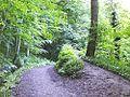 Path through Skipton Woods.jpg