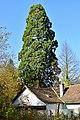 Payerbach - Naturdenkmal NK-112 - Mammutbaum.jpg
