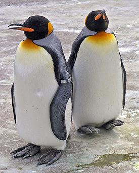 Image result for պինգվիններ