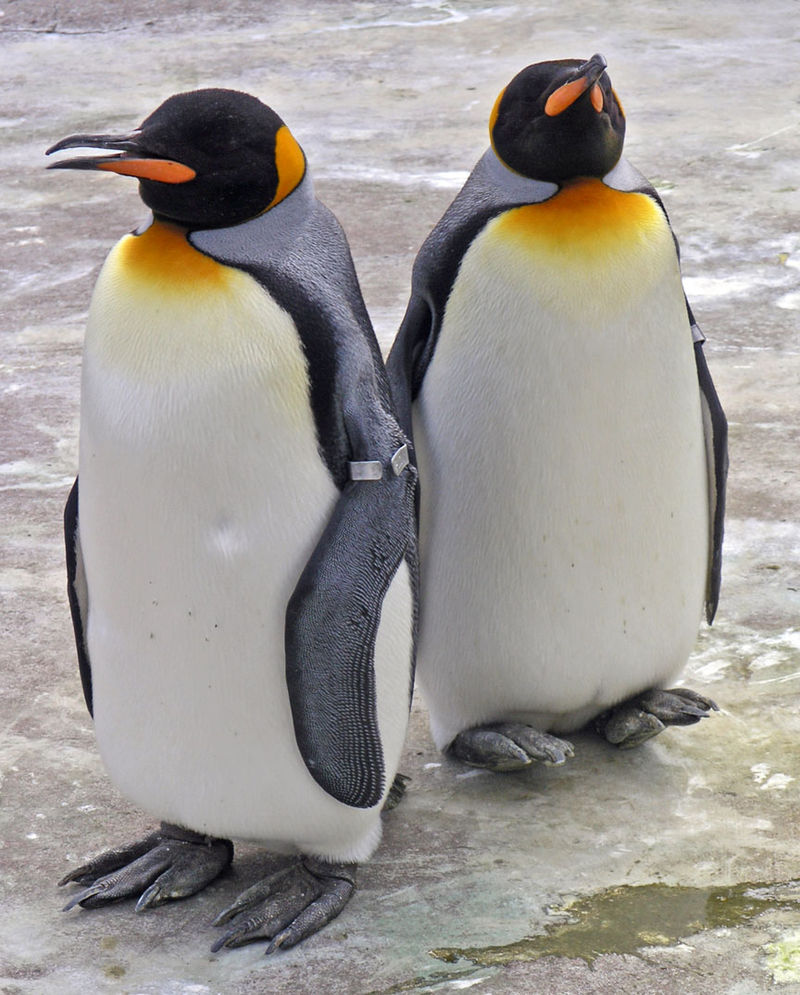 Penguins Edinburgh Zoo 2004 SMC.jpg