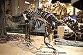 Perot Museum Tenontosaurus.jpg