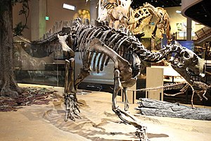 Tenontosaurus - T. dossi on exhibit in the Perot Museum