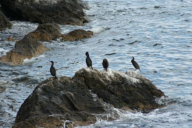 Meeresschutzgebiet Miramare