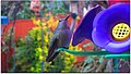 Photo prise le 21 Dec (-8 cel)en BC Canada (Lower Mainland)^^Colibris a l'abreuvoir a nectar - panoramio.jpg