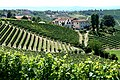 Piemonte, Italy vineyards with village.jpg