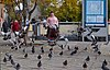 Pigeons flying in front of a pink human (DSCF1939).jpg
