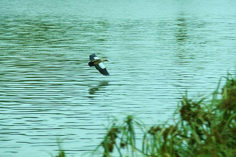 מרחף על האגם