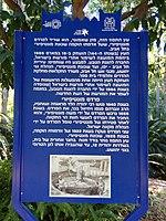 PikiWiki Israel 53348 montefiore tree in the tropical garden in tel aviv.jpg