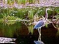Pinckney Island National Wildlife Refuge (5957934649).jpg