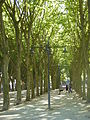 Place des Quinconces, Bordeaux, July 2014 (05).JPG