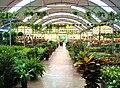 Plantas- Nursery - panoramio.jpg