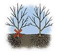 Plantation haie-6-W.Sandras.jpg