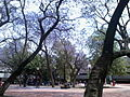 Plazarojauamazc.jpg