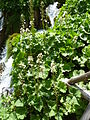 Plitvice lakes (39).JPG