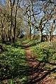 Poets' Path near Ryton - geograph.org.uk - 368743.jpg
