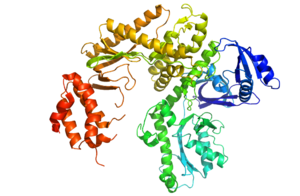 DNA polymerase II - Crystal Structure of DNA pol II (Based on PDB entry 3K5M)