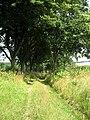 Polní cesta mezi rybníkem Velký Jankov a Kamenickým rybníkem.jpg