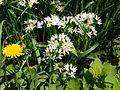 Poltava Botanical garden (97).jpg
