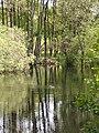 Pond, Laggan Hill - geograph.org.uk - 71997.jpg