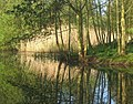 Pool and trees with reflections - geograph.org.uk - 1276156.jpg