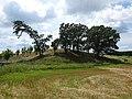 Pope Farm Conservancy - panoramio - Corey Coyle (1).jpg