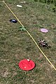 Practice Transect (36453787581).jpg