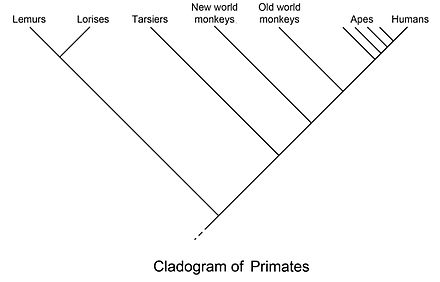 phylogenetische systematik definition