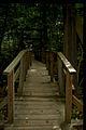Prince William Forest Park PRWI9712.jpg