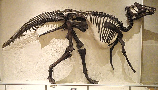 Sternberg Museum Of Natural History Fossil Exhibits