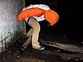 Public urination.jpg