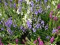 Purple flowers Alexandria, VA.jpg