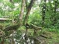 Puyo paseo turístico 5 ene 2015 047 (15597119204).jpg
