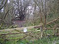 Quarry Wood Nature Reserve - geograph.org.uk - 1200291.jpg