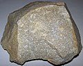 Quartzite (Ediacara Sandstone Member, Rawnsley Quartzite, Neoproterozoic; Mayo Gorge, South Flinders Ranges, South Australia) (26419974065).jpg