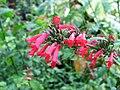 Queen Elizabeth Botanical Gardens 004.jpg