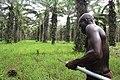 Récolteur de régimes de palme 1.jpg