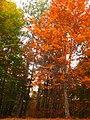 RED TREES.jpg