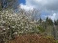 RHS Rosemoor - panoramio - PJMarriott (1).jpg