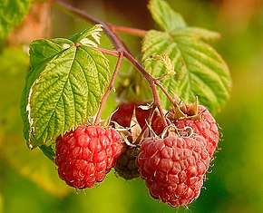 Description de l'image  Image:Raspberries (Rubus Idaeus).jpg .