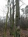 Red trail in Wielkopolski National Park (1).jpg