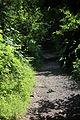 Redburn Country Park, Holywood, July 2013 (08).JPG