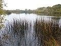 Reeds and the Lake - panoramio.jpg
