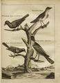 Reis door Noord Amerika gedaan door Pieter Kalm...; vercierd met koperen platen (MU EAJ 939 (Plate 3 Mocking bird en Spreuw)).tif