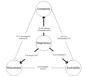 Degeneracy (biology) - Image: Relationships between degeneracy, complexity, robustness, and evolvability
