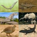 Reptiliomorpha.png