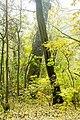 Rezerwat przyrody Morysin, park, Wilanów, Warszawa 10.jpg