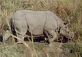 Rhino side view.jpg